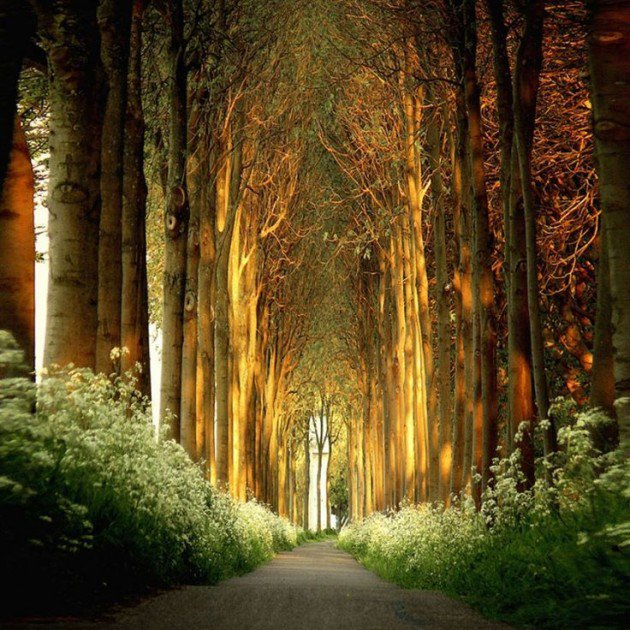 10-Startling-Tree-Tunnels-You-Must-Walk-Through-8-630x630