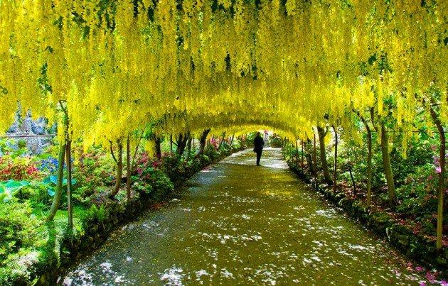 10-Startling-Tree-Tunnels-You-Must-Walk-Through-9-630x403