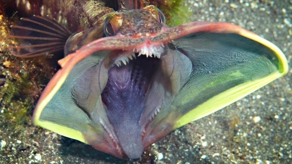 10-sea-creatures-to-amaze-1024x576