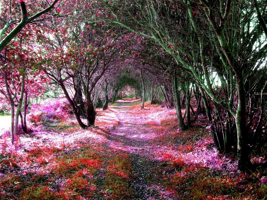 Tree Tunnel, Sena, Spain (1)