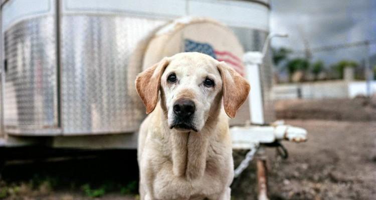 recuerda-los-heroes-caninos-de-busqueda-y-rescate-que-sirvieron-durante-la-tragedia-del-11-9 14