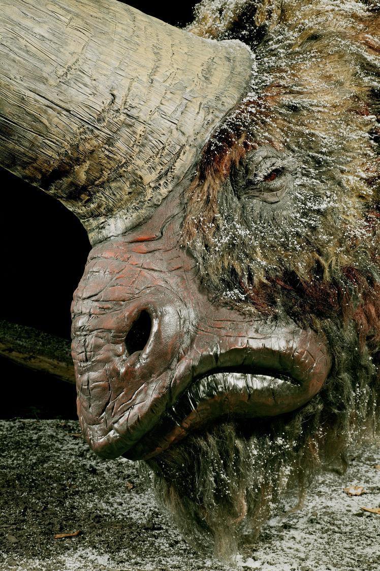16. Elasmotherium sibiricum detail