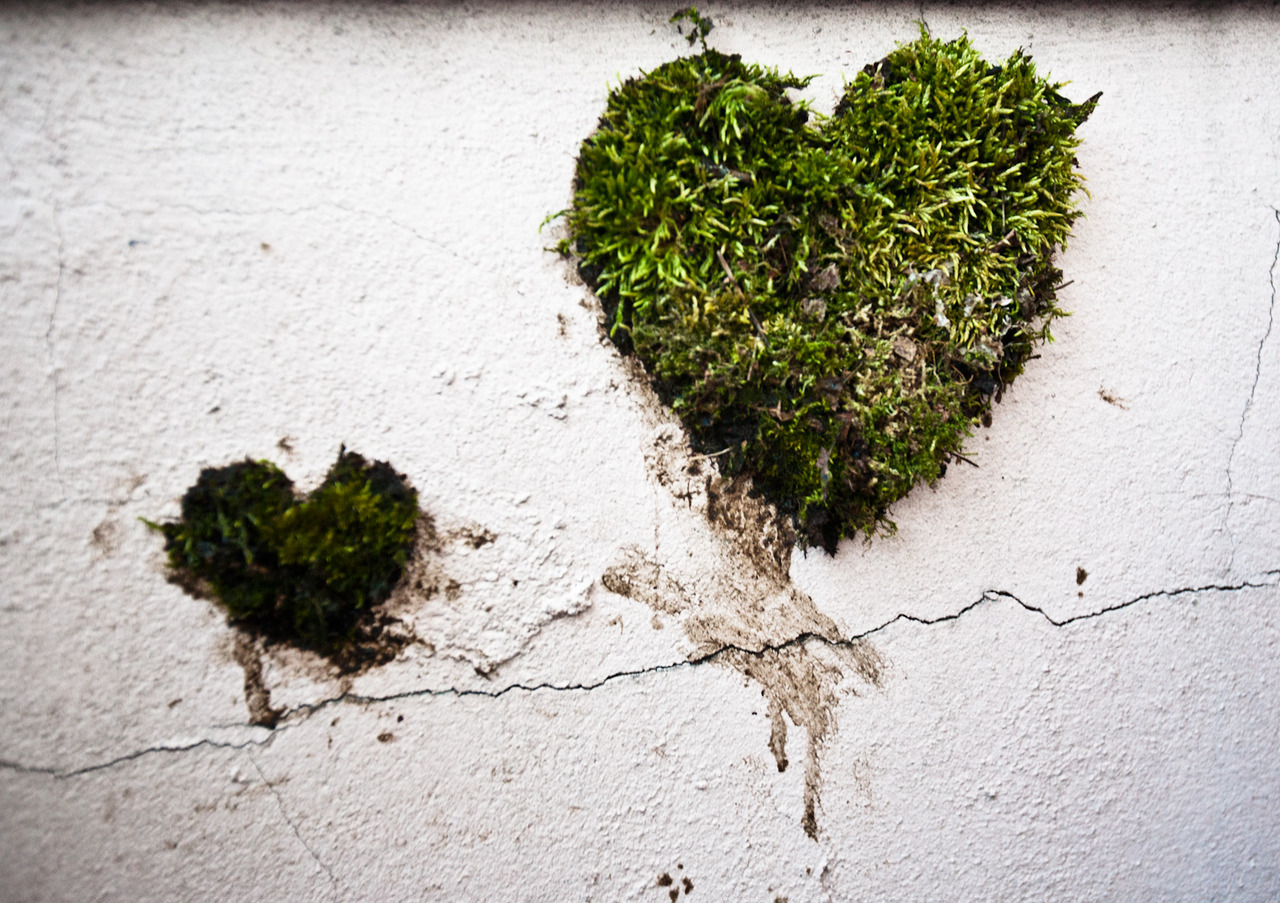Heart-shaped-moss-graffiti