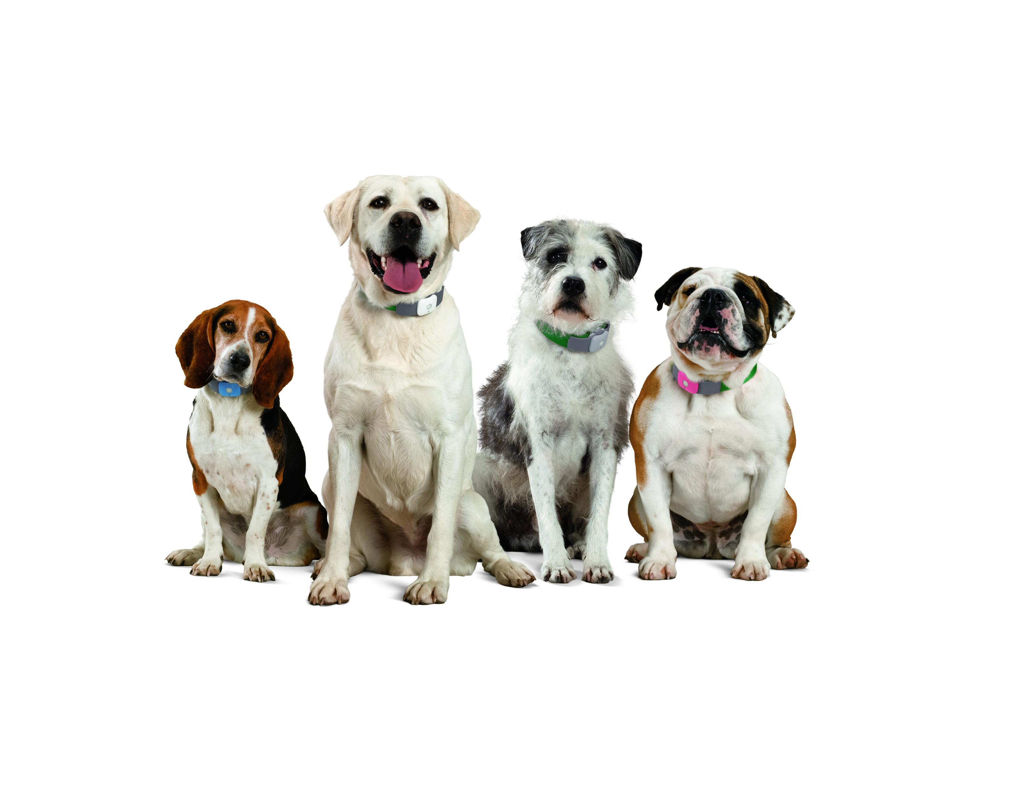 Sledovací obojek pro toulavé kočky a psy (Amazon)