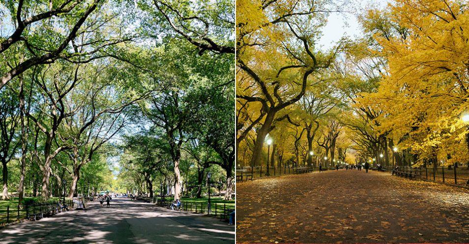 Central Park, NY, USA