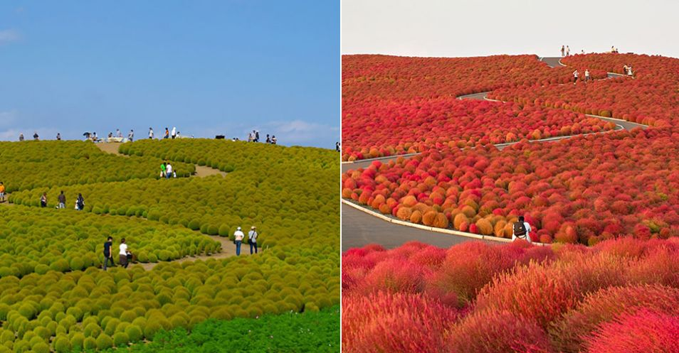 Hitachi Park, Japonsko