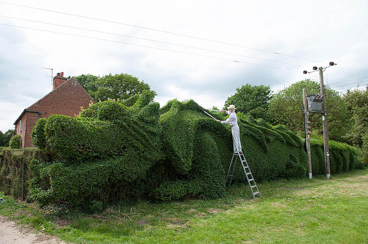 dragon-hedge-1