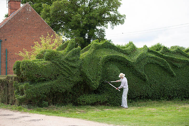 dragon-hedge-2