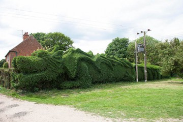 dragon-hedge-4