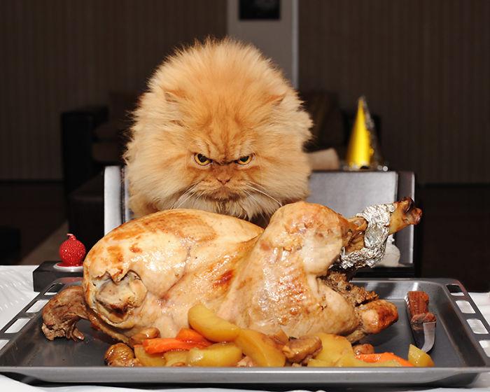 garfi-evil-grumpy-persian-cat-14__700