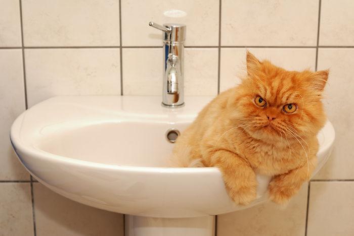 garfi-evil-grumpy-persian-cat-5__700