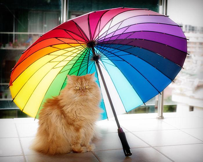 garfi-evil-grumpy-persian-cat-7__700