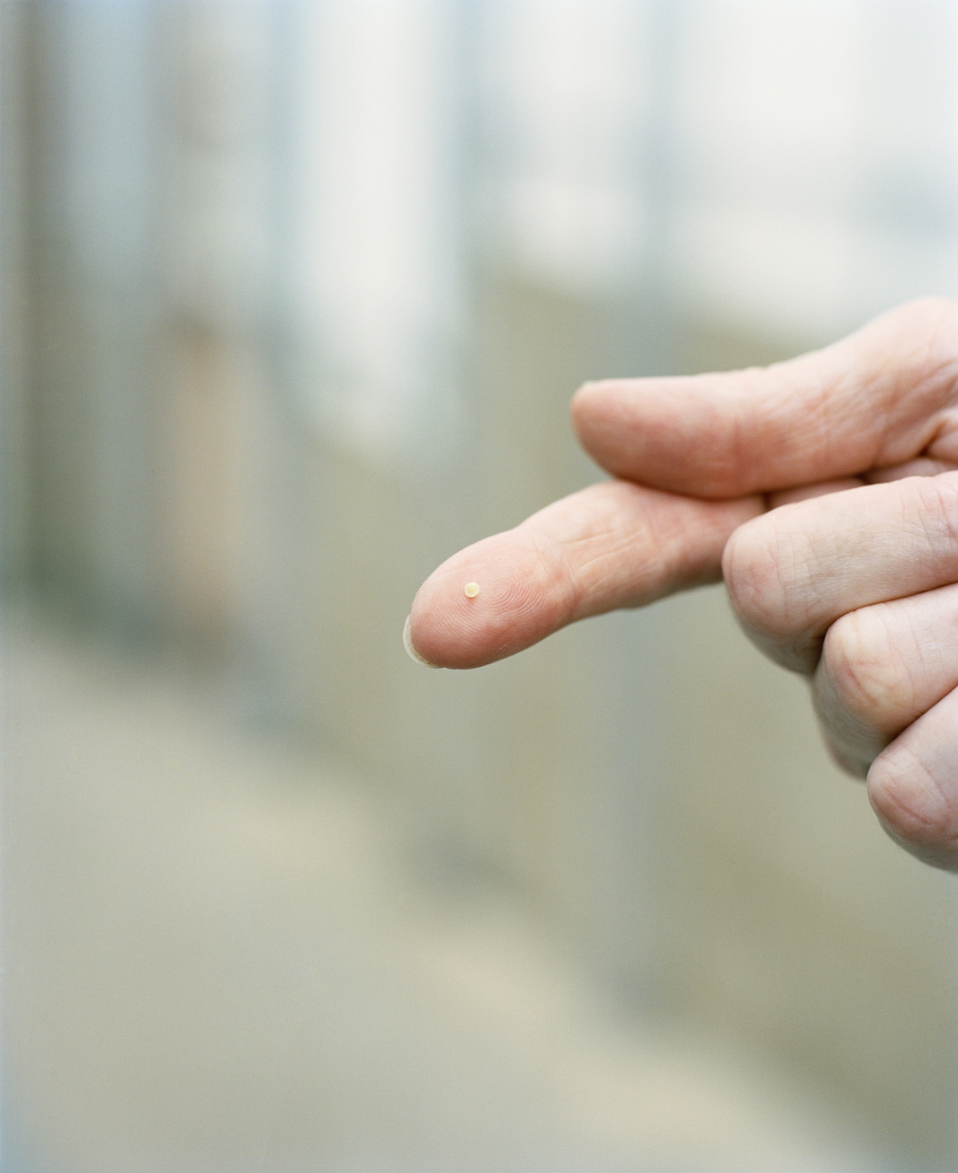 Barley embryo on Wendy's finger.