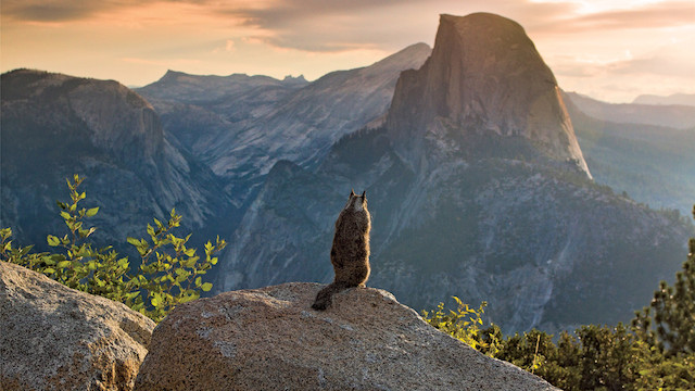 17-Parting-Shot-in-Yosemite-National-Park-California-by-Michael-Hodges