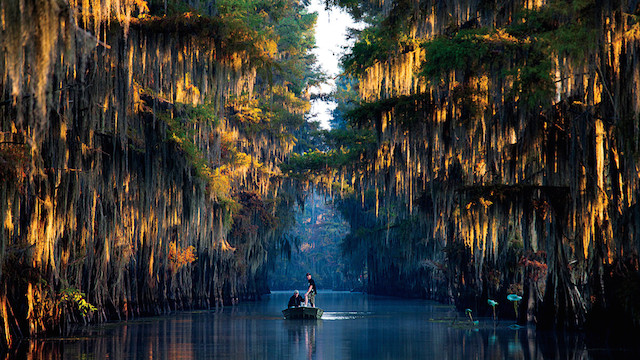 4-Getting-Lost-on-Caddo-Lake-Texas-by-Michael-Hanson