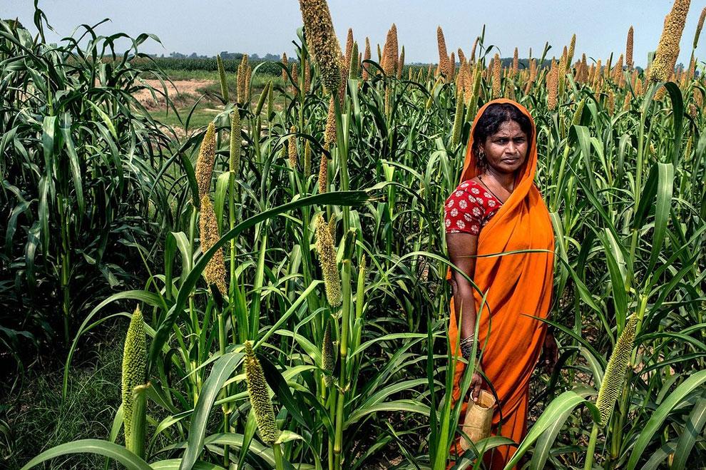 Indie - Saritadevi nemá přístup k záchodu, proto chodí na pole poblíž. (Atul Loke)