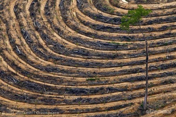 Aerial Documentation in Central Kalimantan