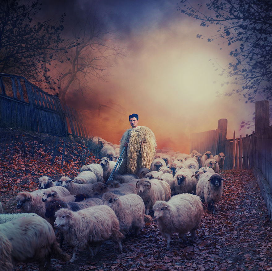 Leading-the-sheep__880