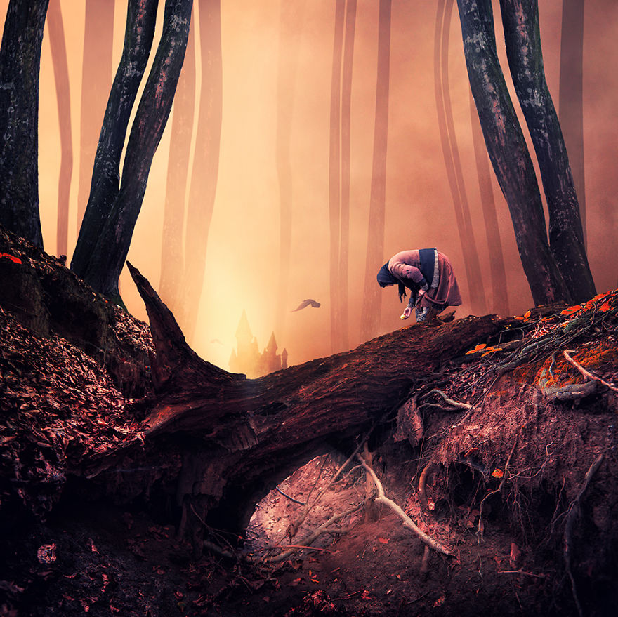 The-lies-about-dark-forests__880