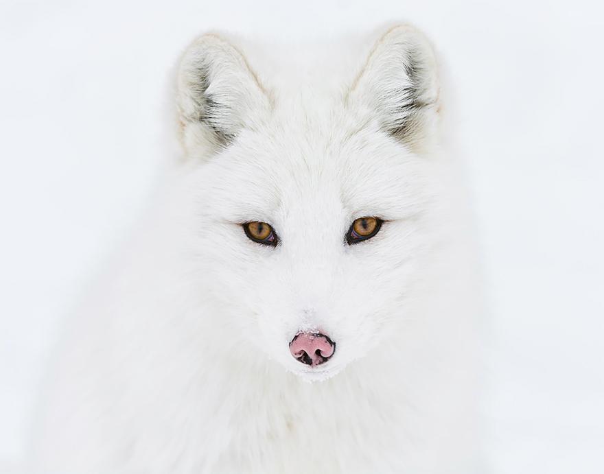 fox-species-photography-1-1