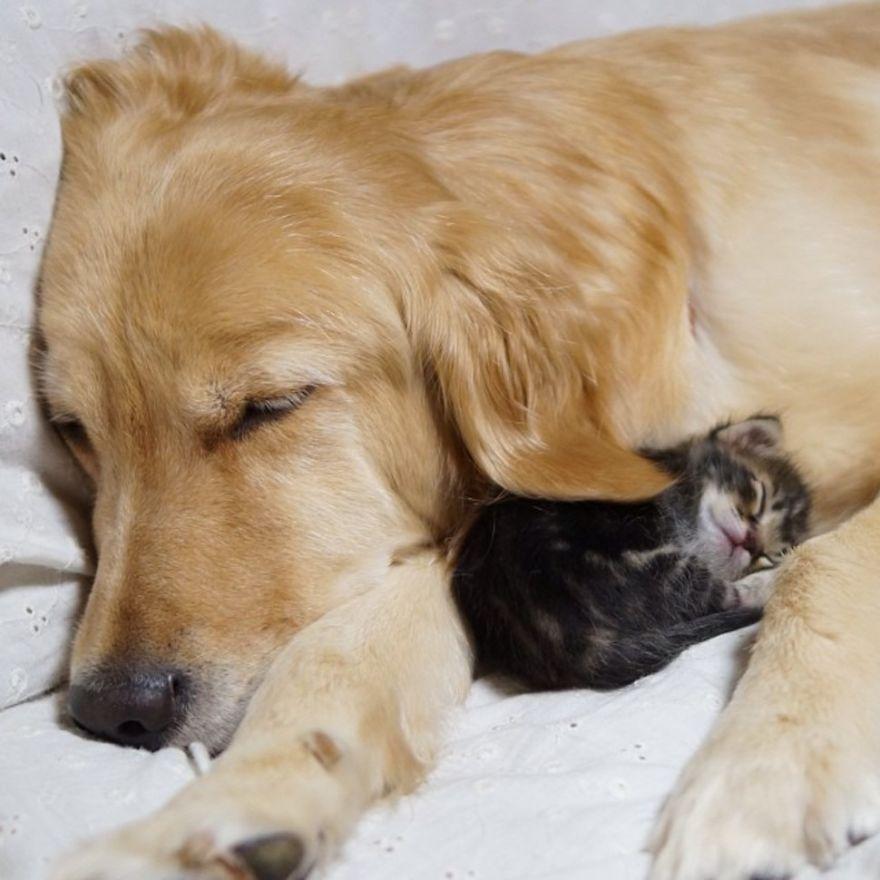 unusual-animal-friendships-10621