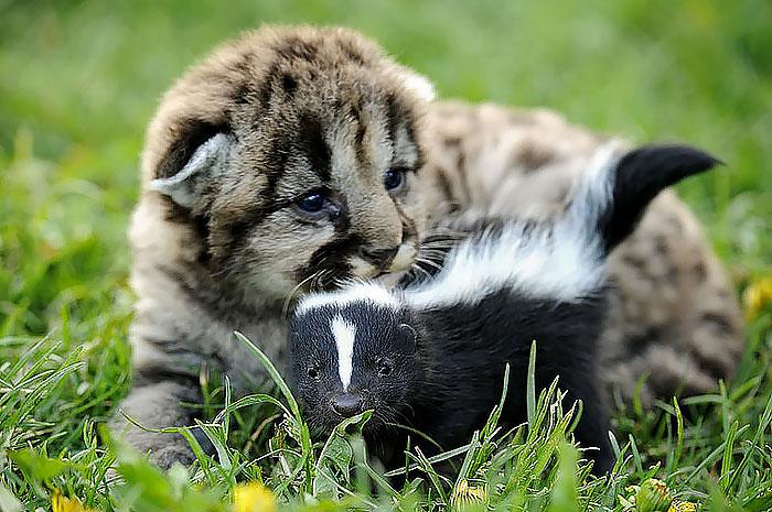 unusual-animal-friendships-11126