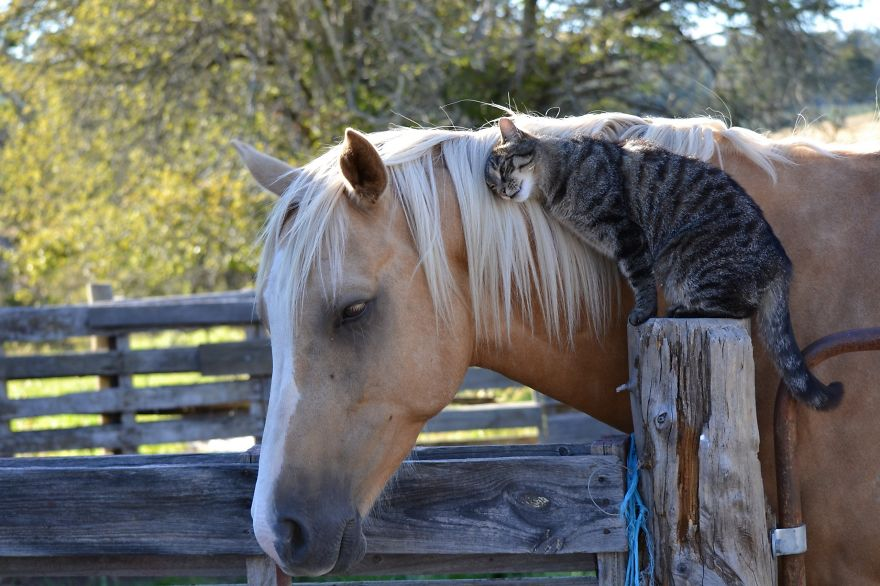 unusual-animal-friendships-17606