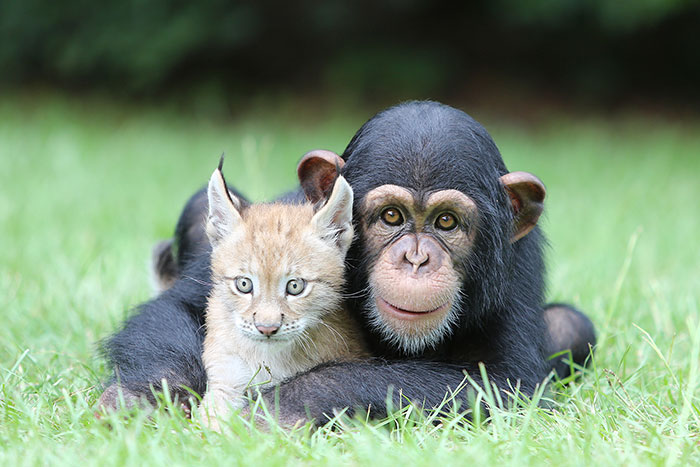 unusual-animal-friendships-27321