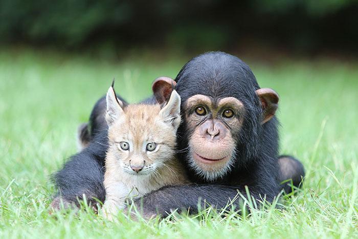 unusual-animal-friendships-27321