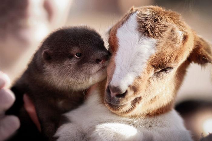 unusual-animal-friendships-41069
