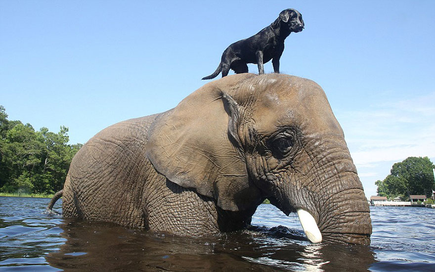 unusual-animal-friendships-43209
