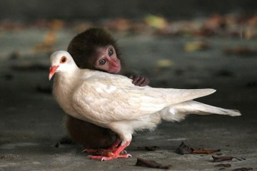 unusual-animal-friendships-48911