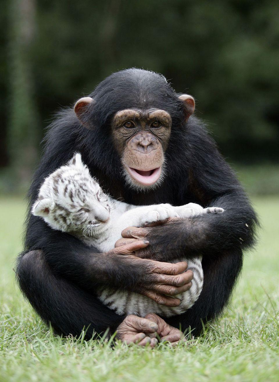 unusual-animal-friendships-54242-960x1316