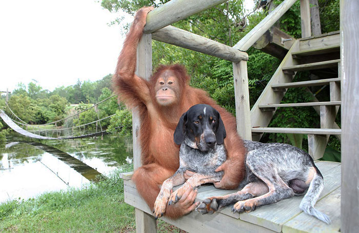 unusual-animal-friendships-54742