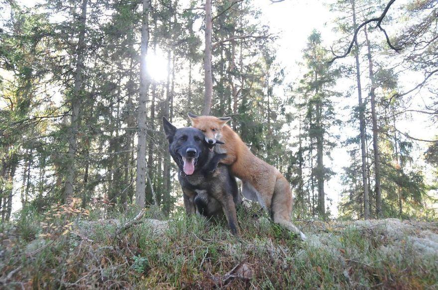 unusual-animal-friendships-56805