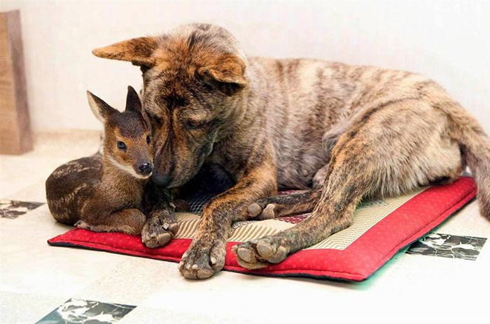 unusual-animal-friendships-61501