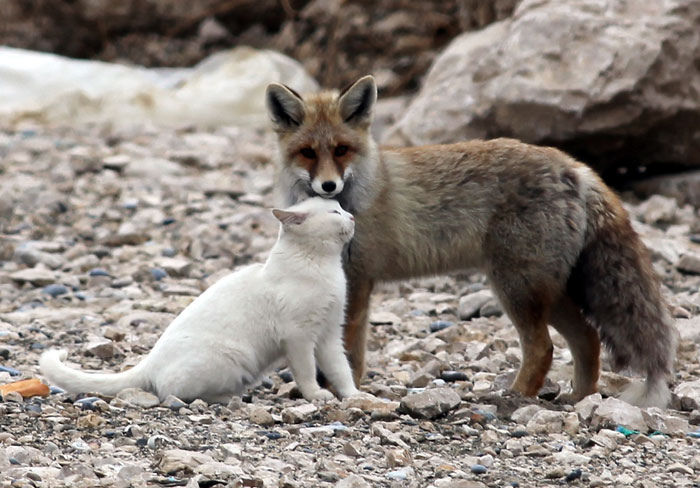 unusual-animal-friendships-62207