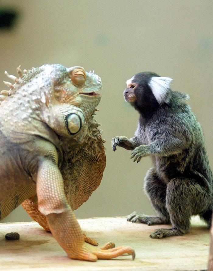 unusual-animal-friendships-62377