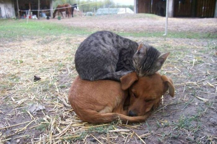 unusual-animal-friendships-77930