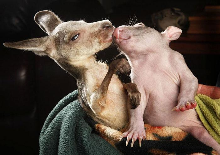 unusual-animal-friendships-78851