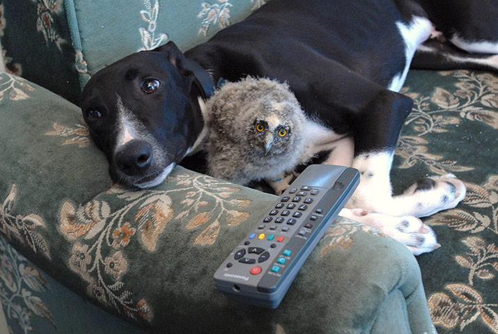 unusual-animal-friendships-83118