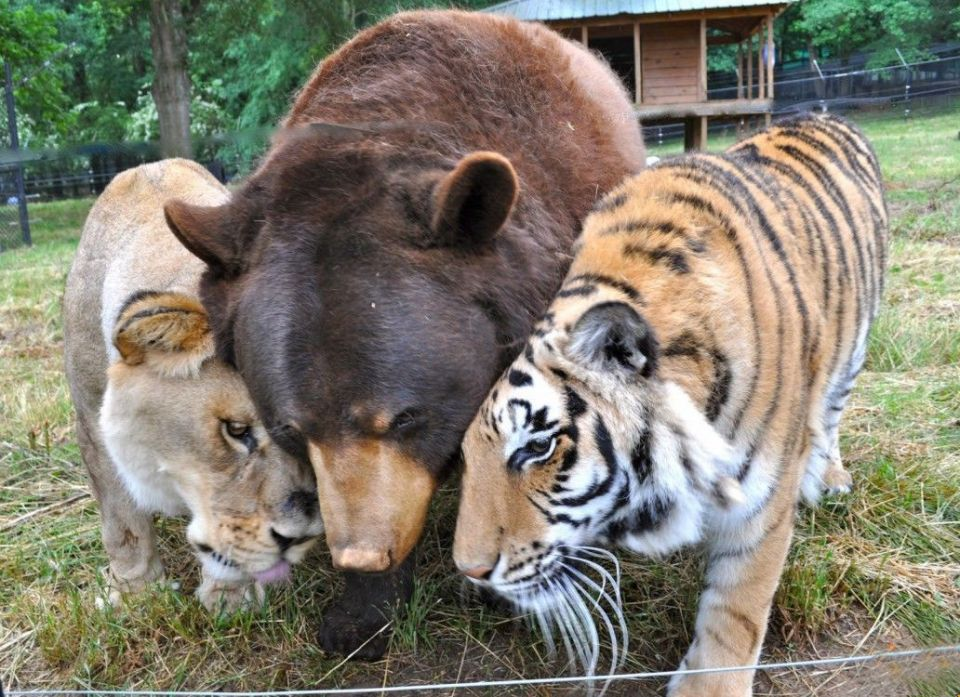 unusual-animal-friendships-84818-960x697