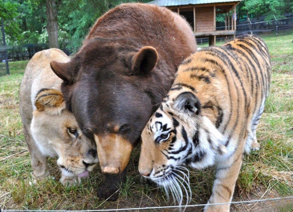unusual-animal-friendships-84818-960x697