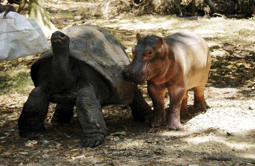 unusual-animal-friendships-85697