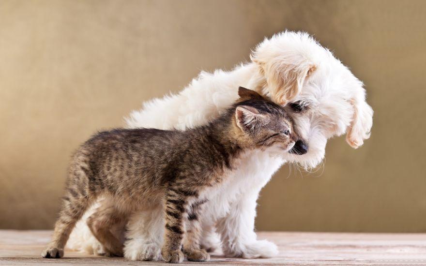 unusual-animal-friendships-89980