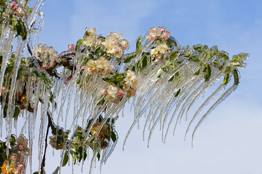 winter-art-see-the-most-amazing-ice-and-snow-formations-11566