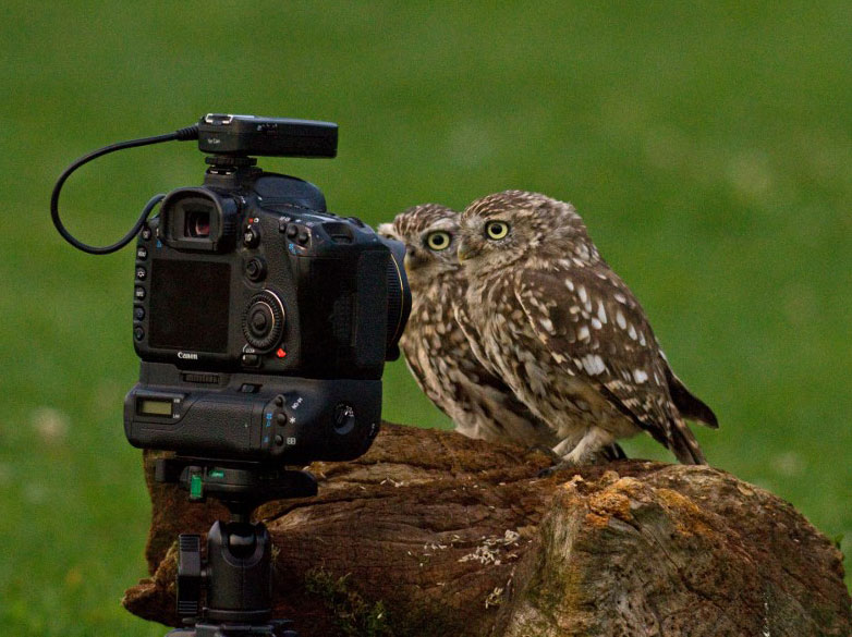 Animals-Getting-Cozy-with-Camera-Gear11