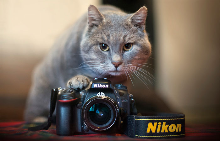 Animals-Getting-Cozy-with-Camera-Gear13
