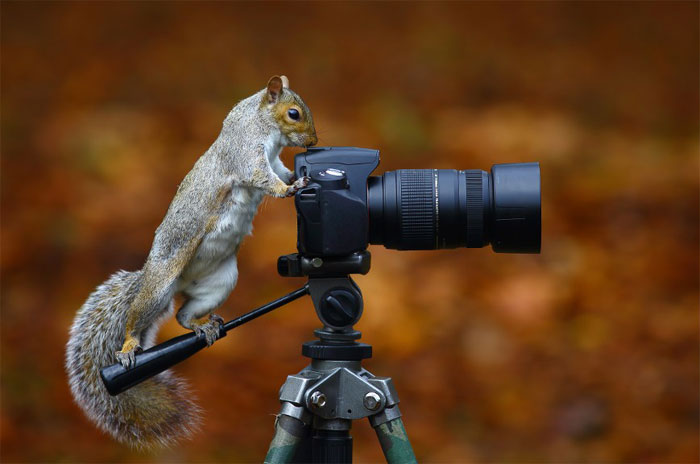 Animals-Getting-Cozy-with-Camera-Gear14