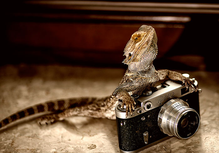 Animals-Getting-Cozy-with-Camera-Gear15